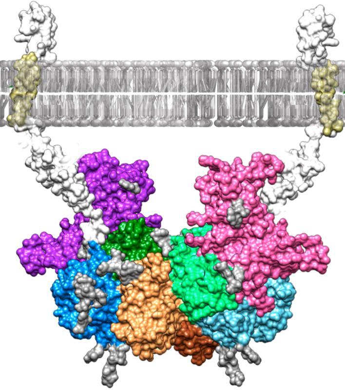 Hemmung-des-an-der-Entstehung-der-Alzheimer-Krankheit-beteiligten-Enzyms-Meprin-analysiert