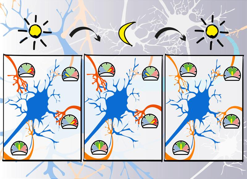 K-nstliche-neuronale-Netze-lernen-wie-der-Mensch-im-Schlaf