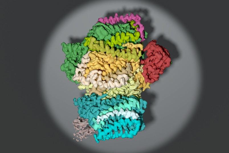 Fotosynthese-Wie-eine-molekulare-Maschine-zusammengebaut-wird